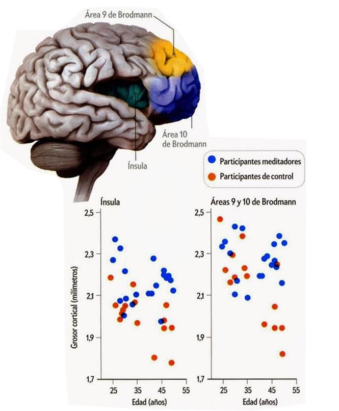 En el cerebro del meditador006
